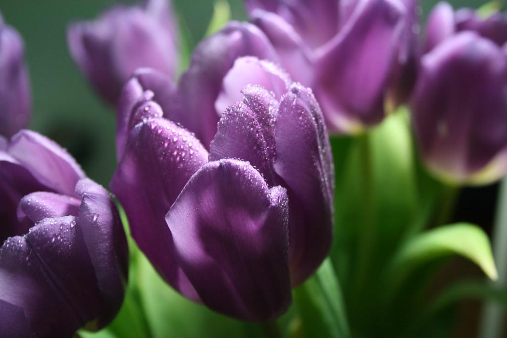 Гифы весенних цветов