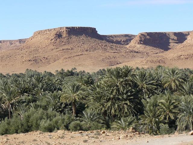 Palmeral en Marruecos