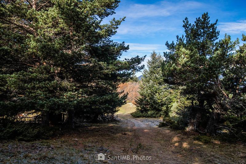 Un claro en el Bòsc de Varicauba