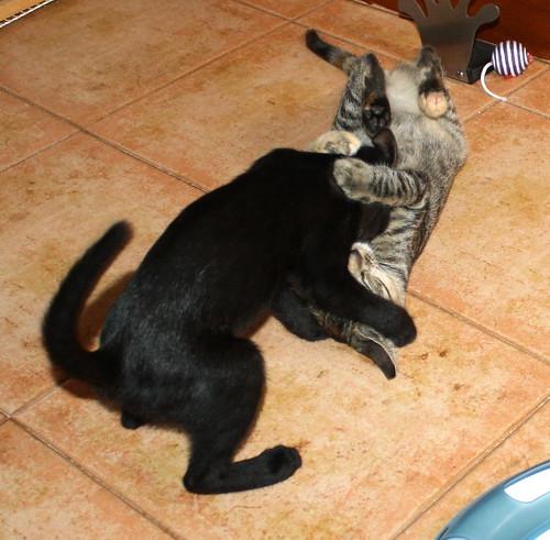 Pocahontas, gatita negra guapísima y dulce esterilizada, nacida en Mayo´19 en adopción. Valencia.  48576781357_59164c1ab5